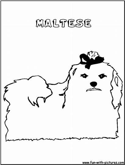 Maltese Coloring Pages Fun Printable