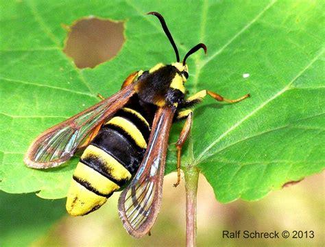 nutzen wespen nutzen wespen der richtige umgang mit bienen und