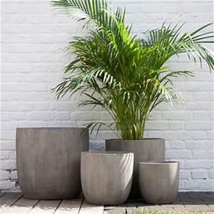 Plantes Grimpantes Pot Pour Terrasse : plantes pour terrasse ensoleill e m bler med egna h nder ~ Premium-room.com Idées de Décoration
