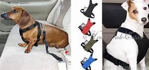 Hundegurt Fürs Auto : sicherheitsgeschirr anschnallgurt f r hunde gadgets ~ Kayakingforconservation.com Haus und Dekorationen
