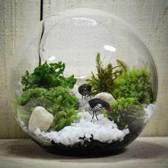Bonsai Im Glas : bonsai moosbaum terrarium selber machen youtube basteln pinterest youtube selber machen ~ Eleganceandgraceweddings.com Haus und Dekorationen
