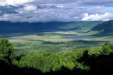 Ngorongoro Crater Tour Day Trip  Gs01 —gofan Safaris And