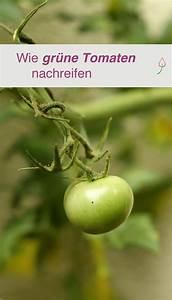 Grüne Tomaten Nachreifen : die besten 25 tomaten z chten ideen nur auf pinterest ~ Lizthompson.info Haus und Dekorationen