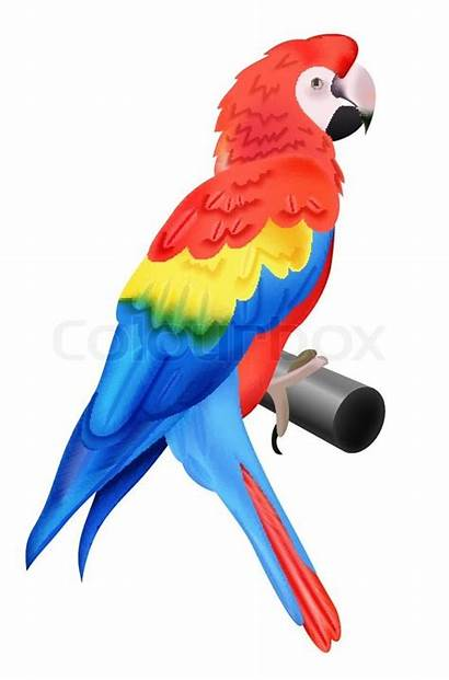 Parrot Macaw Colorful Isolated Bird Background Vector