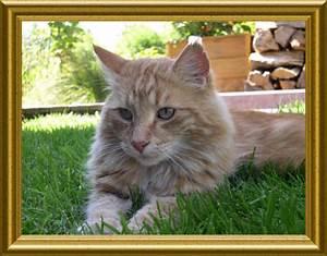 Katze Im Garten Begraben : katzen l wenmauls tageb cher ~ Lizthompson.info Haus und Dekorationen
