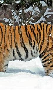 Moscow zoo in winter