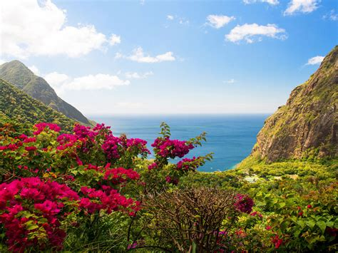 caribbean islands saint lucia beach sea red flowers green