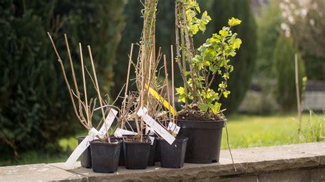 Pflanzendiscounter24 Pflanzen Versand Erfahrungsbericht