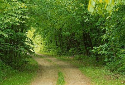 Green Nature Wallpaper Hd Wallpapersafari