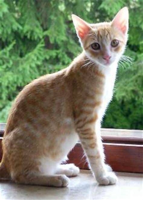kretakatzen kretakatzen