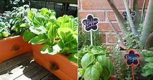 Cultivos mas faciles para comenzar un huerto en casa plantas for 5 cultivos faciles para empezar un huerto en casa