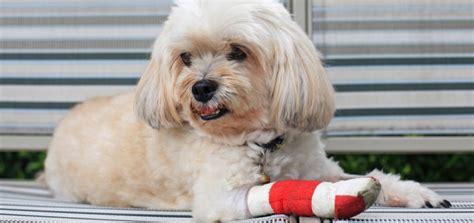 versicherungen fuer den hund  man braucht und  nicht