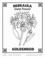 Flower Nebraska State Coloring Worksheets Sheets Dakota Goldenrod Worksheet Education Science Oregon Adult Bird Rushmore Studies Social sketch template