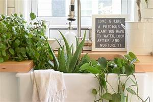 5 House Plants That Are Low Maintenance