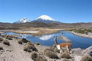 """""""VICUNA - LAUCA NATIONAL PARK"""" by Michael Sheridan Redbubble"""
