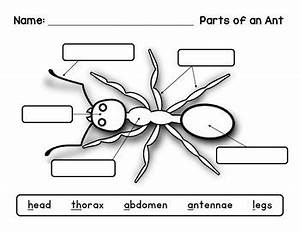 Label An Insect  Ant Diagram By Livin U0026 39  In A Van Down By