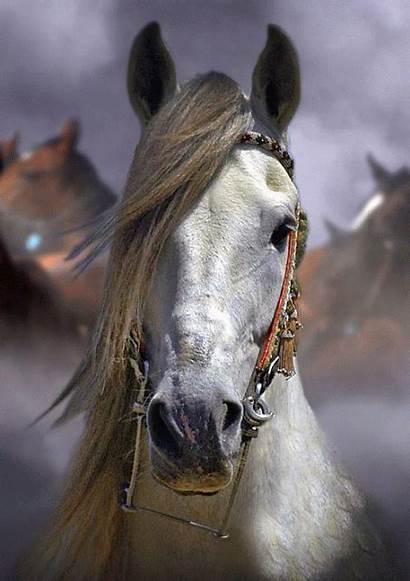 Horse Face Caballos Horses Salvajes Aztecas Cheval