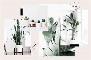 15, Perfect, Plants, For, Minimalists