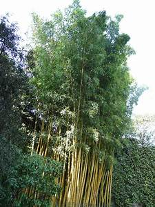 Plants Flowers Fishpole Bamboo