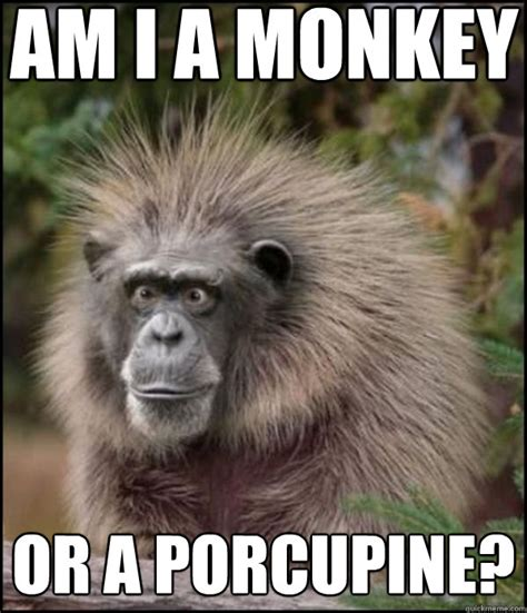 Funny Monkey Meme - funny monkey memes am i a monkey or a porcupine what am i quickmeme funny animals