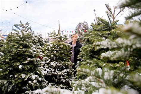 picking the perfect christmas tree mom click