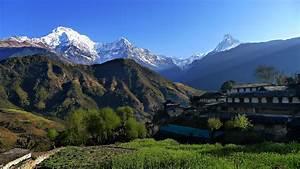 Himalayan | ferrebeekeeper