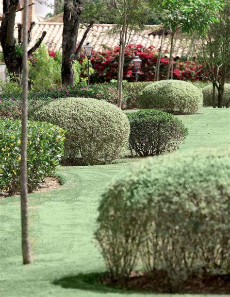Planta Ligustrinho | Flores | Jardinagem, Plantas, Casas ...
