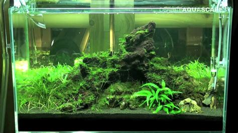 Aquascaping Ideas For Planted Tank by Aquascape Planted Tank 60x30x36 Iwagumi
