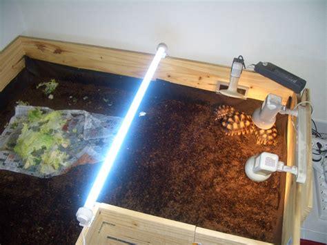 terrarium tortue terre hermann