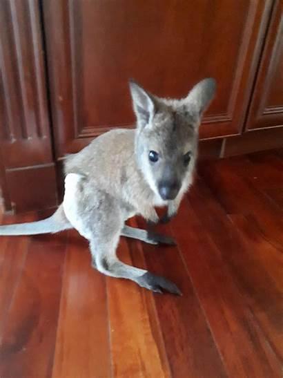Kangaroos Calgary Park Adventure Adorable Cobb June