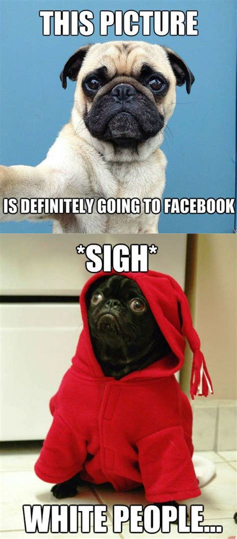 Pug Meme - black pug meme slapcaption com pug memes