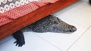 Aufbewahrungsbox Unter Bett : 9 heftige dinge die unter einem bett gefunden wurden youtube ~ Yasmunasinghe.com Haus und Dekorationen