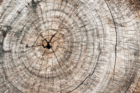 rough wooden cut texture  cracks stock photo