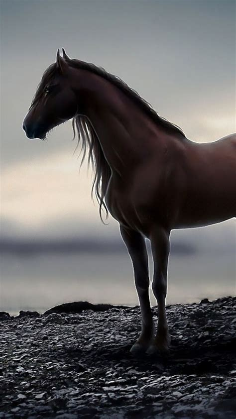 Animals Wallpapers For Mobile - animal mobile wallpaper equestrian elegance