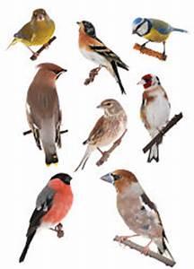 Bird Identifier Chart Backyard Bird Identification Identify Your Visitors