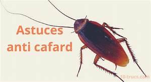 Produit Efficace Contre Les Cafards : anti cafard 10 trucs pour liminer les cafards ~ Dailycaller-alerts.com Idées de Décoration