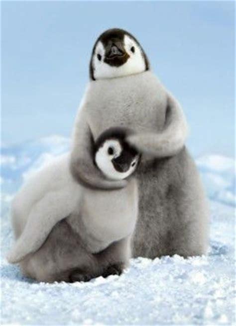 cute penguins playing luvbat