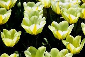 Pflanzen Die Nicht Viel Licht Brauchen : sonnenlicht mit lampe simulieren uv lampen richtig einsetzen ~ Markanthonyermac.com Haus und Dekorationen
