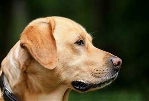 Thyroid Problems In Dogs  A Helpful Guide