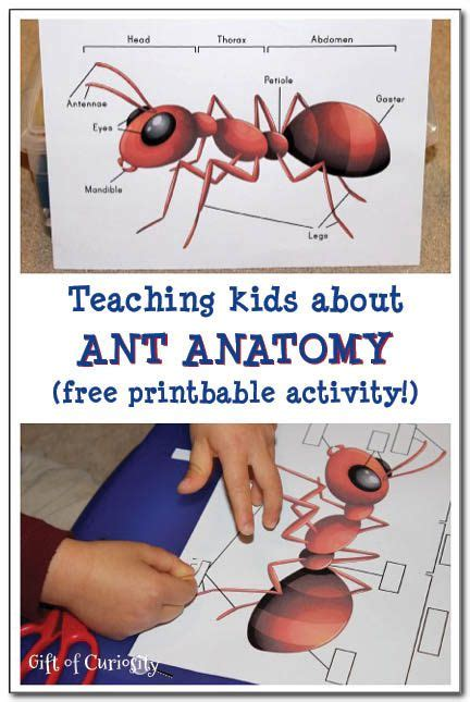 teaching about ant anatomy insect printable magic 811 | a7944596e90b83c344cb9d2a3d7647f8
