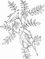 Coloring Birds Pages Twig Ti sketch template