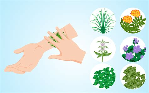 what keeps mosquitoes away how to use plants to keep mosquitoes away 7 easy steps