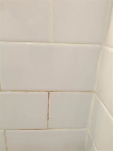 Serratia Marcescens Bathroom Dangerous by Serratia Marcescens In Shower Grout Doityourself