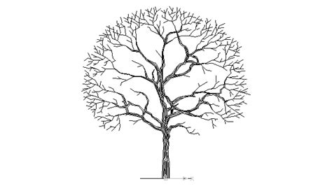 sycamore tree drawing  getdrawings