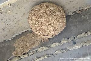 Nid De Guepe Dans Le Sol : nid de gu pes les chroniques de mon jardin ~ Dailycaller-alerts.com Idées de Décoration
