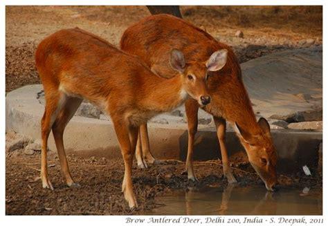 animals   delhi zoo india kalpana image archives