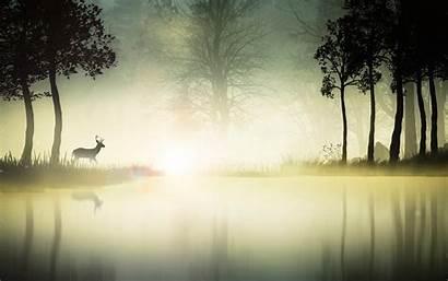 Deer Environment Nature Landscape River Animals Wallpapers