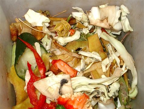 where can i dump a food waste