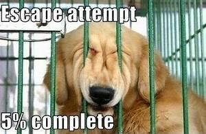 Dog Meme Galler... Shane Dog Quotes