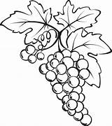 Grapes Grape Coloring Bunch Drawing Pages Vine Drawings Fruits Printable Clipart Vegetables Clip Sketch Fruit Wine Leaves Sheets Pencil sketch template